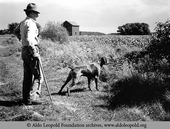 aldo leopolds hunting experience essay The library of america's new edition, aldo leopold: a sand county almanac & other writings on conservation and ecology, is a beautiful book, as all loa editions are, but one can't easily.
