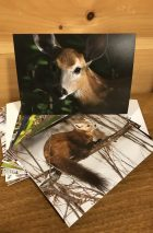 wildlife cards
